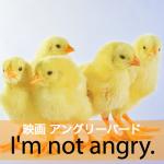「映画 アングリーバード」から学ぶ→ I'm not angry.