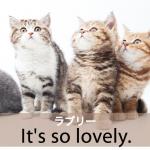 「ラブリー」から学ぶ→ It's so lovely.