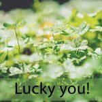 「ラッキーバッグ」から学ぶ→ Lucky you!