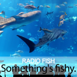 「RADIO FISH」から学ぶ→ Something's fishy.