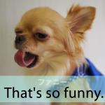 「ファニー」から学ぶ→ That's funny.